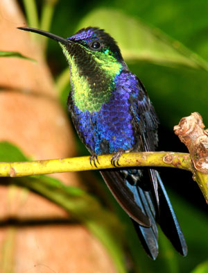 Birdwatching Tours in Drake Bay, Costa Rica