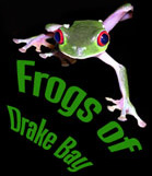 Frogs of Drake Bay Home Page